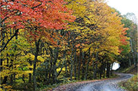 Beautiful fall roads